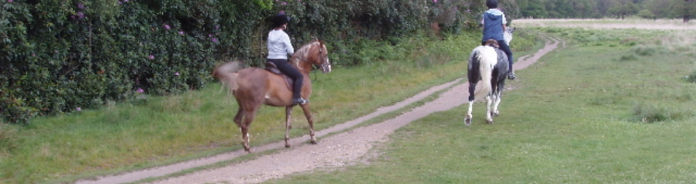 Horse riding in Dexter